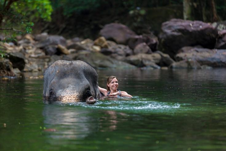 Thailande-Elephant.jpg