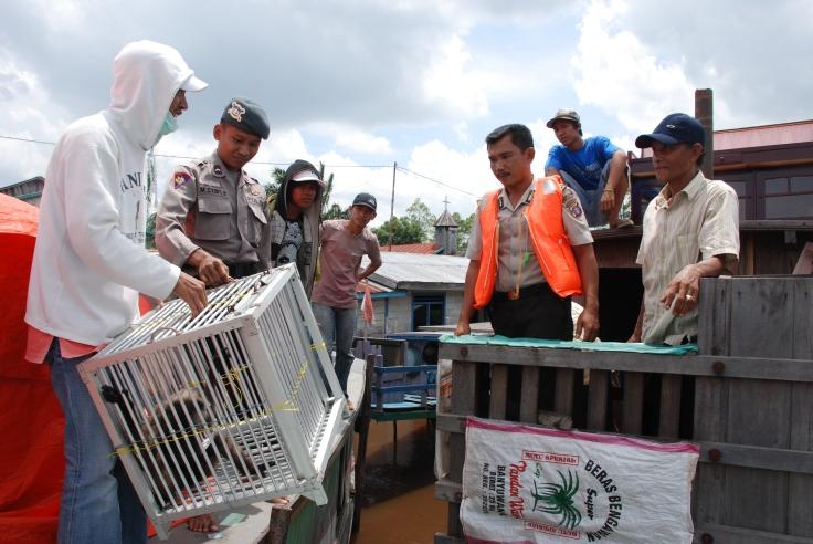 Confiscation et remise à Kalaweit (credit Kalaweit)